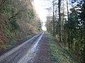 Forest Track in Cwm Broadwell Wood - geograph.org.uk - 684574.jpg