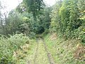 Forest Track near Finlane - geograph.org.uk - 1453637.jpg