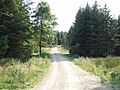 Forest access road and bike track, Llandegla Forest - geograph.org.uk - 205239.jpg
