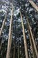 Forest in Kamiishizu, Ogaki City, Japan - panoramio (1).jpg
