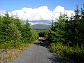 Forestry road . - geograph.org.uk - 503454.jpg