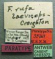 Formica laeviceps casent0103372 label 1.jpg