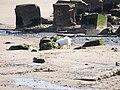 Fraisthorpe Beach - geograph.org.uk - 1731150.jpg