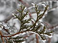 Freezing Rain in Canada 2013 8.JPG