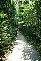 Fußweg Felsengarten Sanspareil 04082019 040.jpg