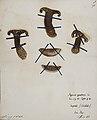 Fungi agaricus seriesI 044.jpg