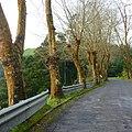 Furnas, S. Miguel, Açores,Portugal - panoramio (12).jpg