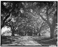 GENERAL VIEW- DRIVEWAY TO HOUSE - Mansfield Plantation, U.S. Route 701 vicinity, Georgetown, Georgetown County, SC HABS SC,22-GEOTO.V,8-3.tif