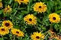 Garden Marigolds Bunch PLT-FL-YC-2.jpg