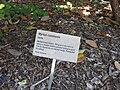 Gardenology.org-IMG 0401 rbgs10dec.jpg