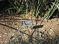 Gardenology.org-IMG 0940 hunt07mar.jpg