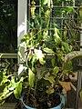 Gardenology.org-IMG 2013 hunt08sep.jpg