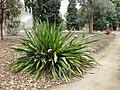 Gardenology.org-IMG 4765 hunt0904.jpg