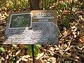 Gardenology.org-IMG 7303 qsbg11mar.jpg