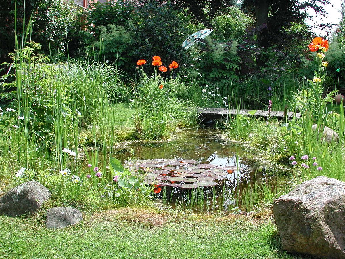Stagno acqua wikipedia for Stagno giardino