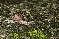 Gastropoda (34810722312).jpg