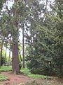 Gdansk Oliwa - Ogrod Botaniczny (5).JPG