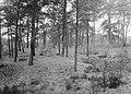 Gemengde beplantingen, grove dennenbos, Bestanddeelnr 165-0351.jpg