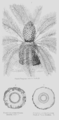 Geology and Mineralogy considered with reference to Natural Theology, plate 59.png