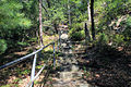 Gfp-wisconsin-mill-bluff-state-park-ladders-up-the-hill.jpg