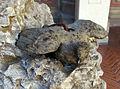 Giambologna, colomba con ali aperte, 1567.JPG