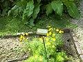 Giardino botanico di Brera (Milan) 165.jpg