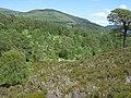 Glen Affric - geograph.org.uk - 1088529.jpg