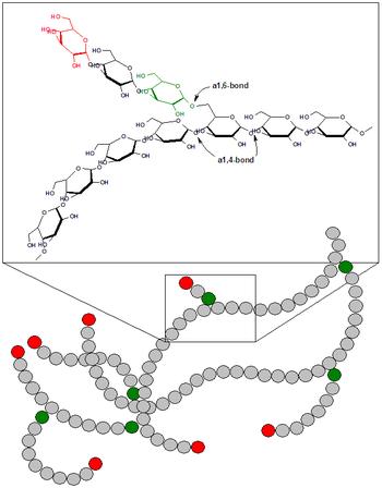 a glyoxalase útvonala egyidejű parazitákban