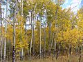 Golden Gate Aspen Oct 16.jpg