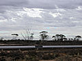Goldfields-Pipeline 2005.jpg