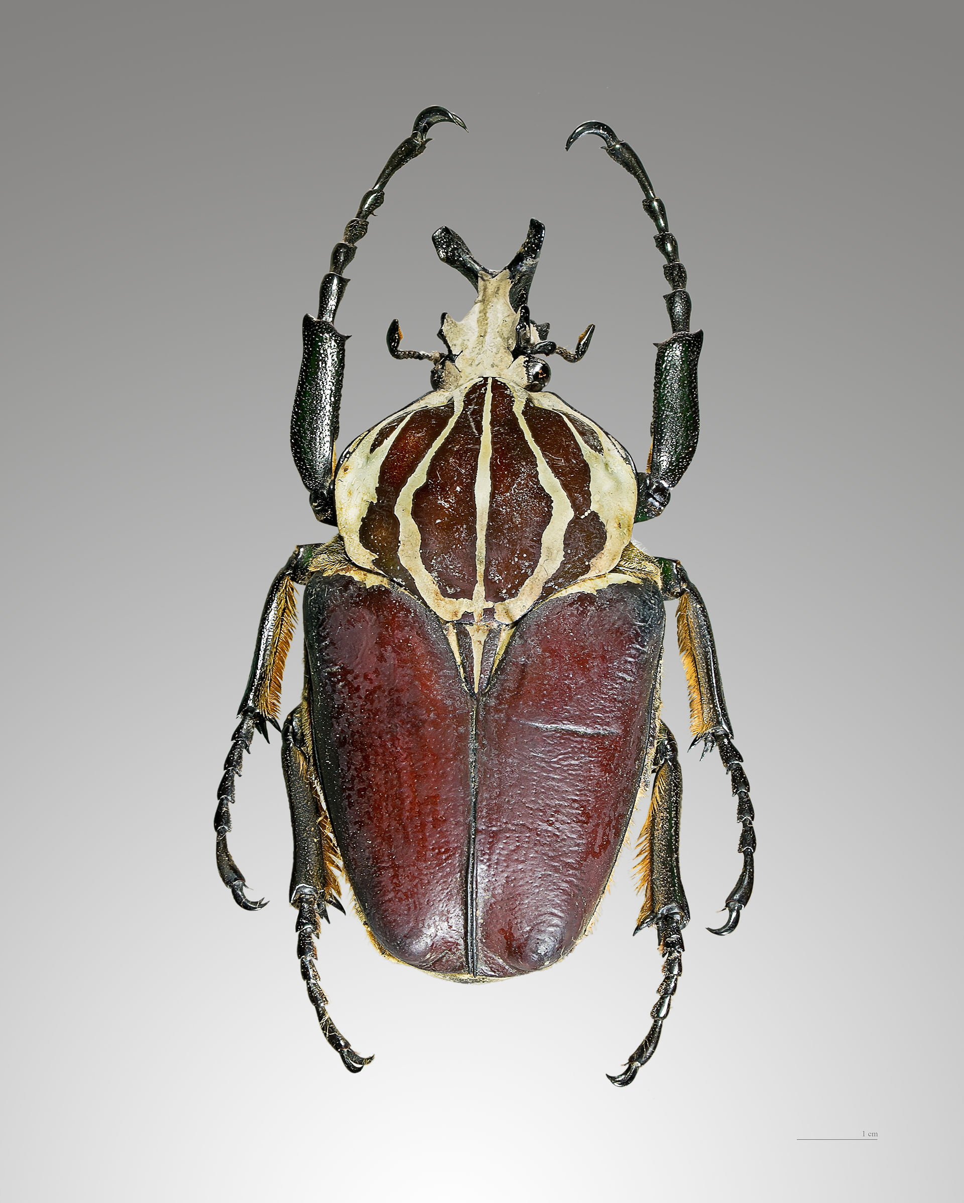List Of Largest Insects