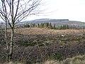 Gortin Glen Forest Park - geograph.org.uk - 116761.jpg