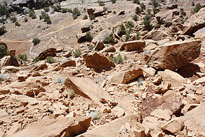 Grand Valley (Colorado-Utah) - Sandstone rocks and formations are common on the Colorado Plateau desert lands
