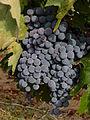 Grape 1180662.jpg