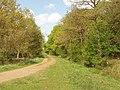 Gravelled track, Waterperry Wood - geograph.org.uk - 1288895.jpg