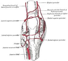 Arterie del ginocchio