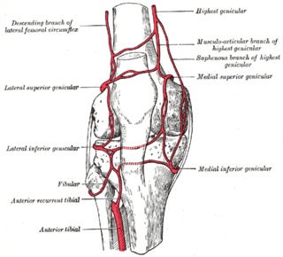 Anterior tibial recurrent artery