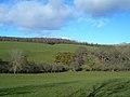 Grazing Land - geograph.org.uk - 354806.jpg