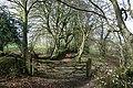 Green lane near Churchstanton - geograph.org.uk - 1215215.jpg