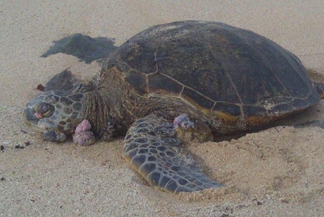 Florida Keys Pet Friendly Beaches