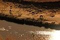 Groot-visriver - panoramio (3).jpg