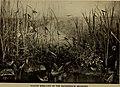 Guide leaflet (1901) (14766064965).jpg