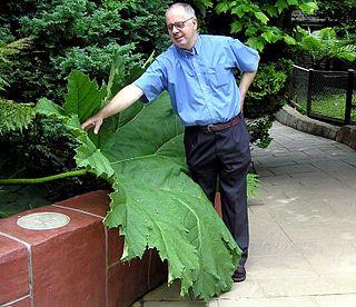 Gunneraceae