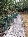 HK 西貢 Sai Kung District hiking Ma On Shan Country Park Pak Sha Wan Sam Sing Wan Pak Ma Tsui February 2021 SSG 56.jpg
