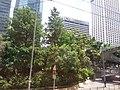 HK Bus 101 view 金鐘道 Queensway August 2018 SSG 03.jpg