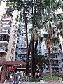 HK SSP 荔枝角 Lai Chi Kok 美孚新邨 Mei Foo Sun Chuen 萬事達廣場 Mount Sterling Mall and park February 2019 SSG 05.jpg