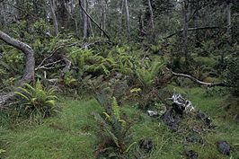 Hakalau forest national wildlife refuge.jpg