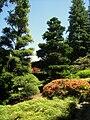 Hakone Gardens, Saratoga, CA - IMG 9167.JPG