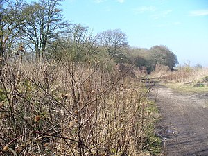 Harrow Way - The Harrow Way - surviving present track north east of Overton, Hampshire