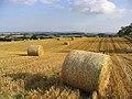 Harvest Bales - geograph.org.uk - 219455.jpg
